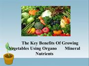 The Key Benefits Of Growing Vegetables Using Organo Mineral Nutrients