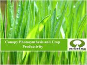 Canopy Photosynthesis