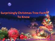 Surprisingly Christmas Tree Facts To Know