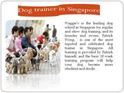 Dog trainer in Singapore