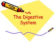 the_digestive_system
