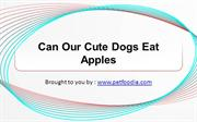 Can Our Cute Dogs Eat Apples