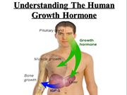 Understanding The Human Growth Hormone