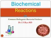 cdocumentsandsettingsadministratordesktopbiochemicalreactioninbacterio
