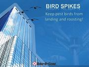 Introduction to Bird Spikes
