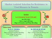 MAS for Resistance to viral disease