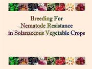 breeding for solanaceous crop