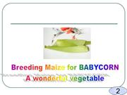 Breeding Maize for BABYCORN