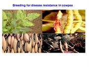 breeding for disease resistance in cowpea