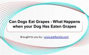 Can Dogs Eat Grapes - What Happens when your Dog Has Eaten Grapes
