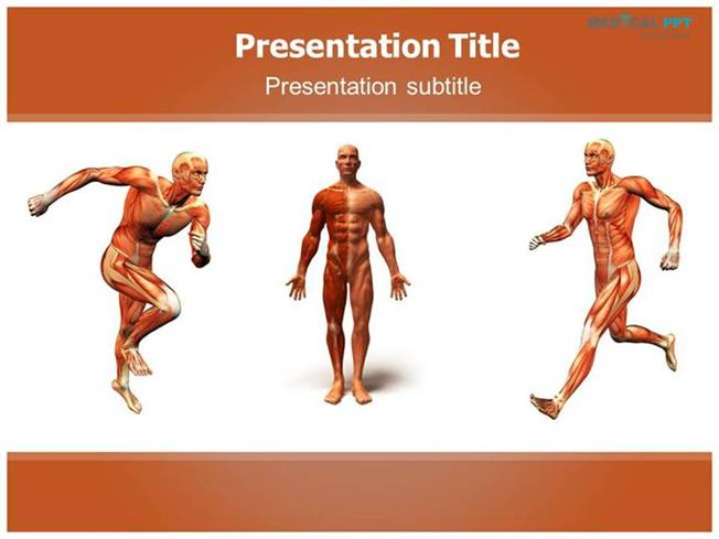 Anatomy body powerpoint templates authorstream toneelgroepblik Image collections