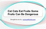 Cat Cats Eat Fruits Some Fruits Can Be Dangerous