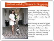 Proffesional Dog trainer in Singapore