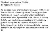 How_to_Photograph_Wildlife
