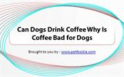 Can Dogs Drink Coffee Why Is Coffee Bad for Dogs