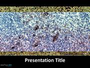 Pathology PPT Templates