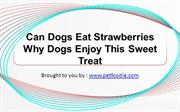 Can Dogs Eat Strawberries Why Dogs Enjoy This Sweet Treat
