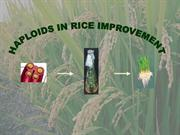 haploids in rice improvement