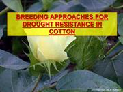 BREEDING APPROACHES FOR DROUGHT RESISTANCE IN COTTON