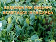 Breeding for drought resistance in chickpea