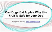 Can Dogs Eat Apples Why this Fruit is Safe for your Dog