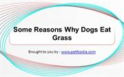 Some Reasons Why Dogs Eat Grass