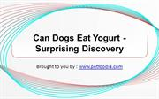 Can Dogs Eat Yogurt - Surprising Discovery