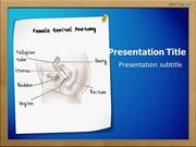 Female Genital Anatomy PowerPoint Template - medicalppttemplates.com
