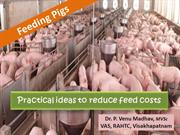 Strategies for feeding pigs