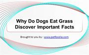 Why Do Dogs Eat Grass Discover Important Facts