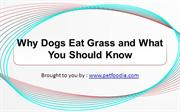 Why Dogs Eat Grass and What You Should Know