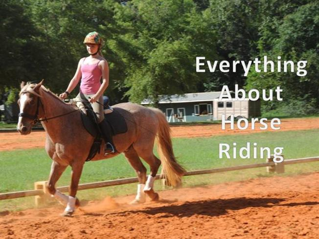 Everything About Horse Riding Authorstream