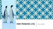 How penguins live