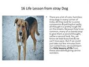 16 Life Lesson from stray Dog