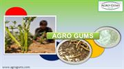 Impact of Guar Gum Production on Indian Global Economy