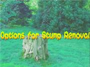 Options for Stump Removal