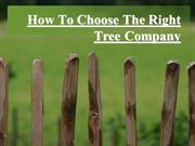 How To Choose The Right Tree Company