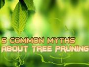 5 Common Myths About Tree Pruning