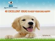 40 Excellent Ideas to Keep Your Dog Happy