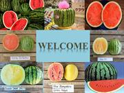 Watermelons[1]