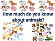 Learn more about animals