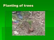 planting_of_trees