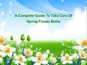 A Complete Guide To Take Care Of Spring Flower Bulbs