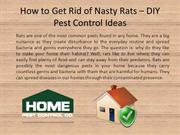 How to Get Rid of Nasty Rats