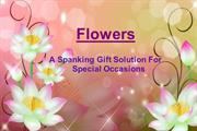 Flowers : A spanking gift solution for special occasions