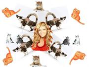GABY    CATS