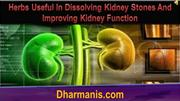Herbs Useful In Dissolving Kidney Stones And Improving Kidney Function