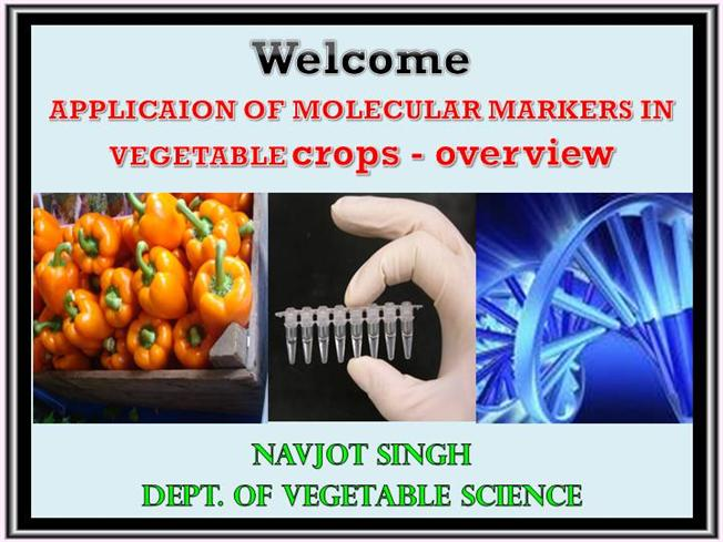 APPLICAION Of MOLECULAR MARKERS In VEGETABLE Crops   Overview |authorSTREAM