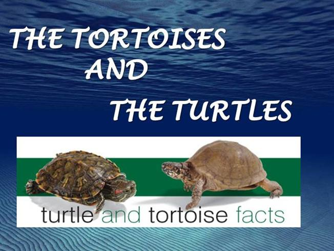 turtle and tortoise difference