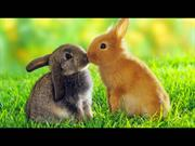 Beautiful Rabbits